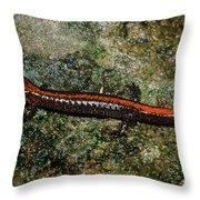 Zig-zag Salamander Throw Pillow