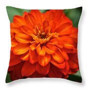 Zinnia Flare Throw Pillow