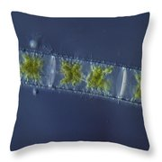 Zygnema Sp. Algae Lm Throw Pillow