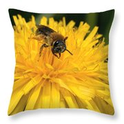 A Bee In A Dandelion Throw Pillow