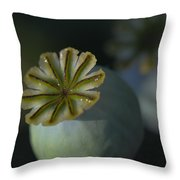 After The Flower 2 Throw Pillow