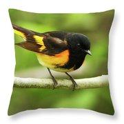 American Redstart Warbler Throw Pillow