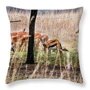 Antidorcas Marsupialis Throw Pillow