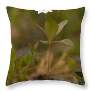 Arctic Starflower Throw Pillow