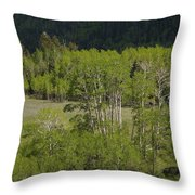 Aspen Meadows IIi Throw Pillow