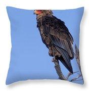 Bataleur Eagle Viewpoint Throw Pillow