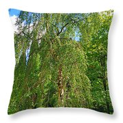 Birch Tree In Afternoon Throw Pillow
