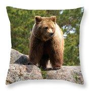 Brown Bear 4 Throw Pillow