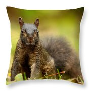 Curious Black Squirrel Throw Pillow by Mircea Costina Photography