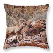 Escalante Canyon Desert Bighorn Sheep  Throw Pillow