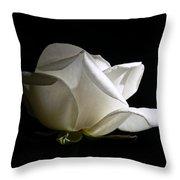 Evening Light White Rose Flower Throw Pillow