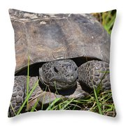 Gopher Tortoise Close Up Throw Pillow