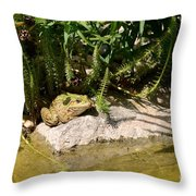Green Frog Sitting At The Pond Throw Pillow