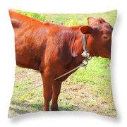 Jamaican Cow Throw Pillow