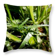 Look Down For Beauty Throw Pillow
