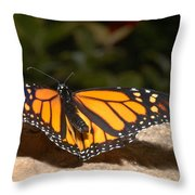 Monarch 2 Throw Pillow