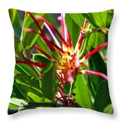 Red Spider Flower Close Up Throw Pillow