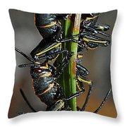 Romalea Microptera Hierarchy Throw Pillow