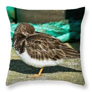 Sleepy Turnstone At Padstow Harbour Throw Pillow