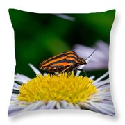 Striped Traveler Throw Pillow