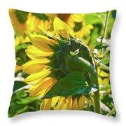 Sunflower 7249a Throw Pillow