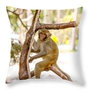 Swinging Monkey Throw Pillow