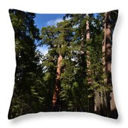 Yosemite Sequia Throw Pillow