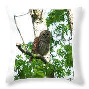 0298-001 - Barred Owl Throw Pillow