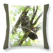 0304-002 - Barred Owl Throw Pillow