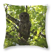 0313-010 - Barred Owl Throw Pillow