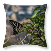 0518- Butterfly Throw Pillow