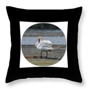061016-73 Throw Pillow