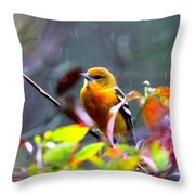 0651 - Baltimore Oriole Throw Pillow