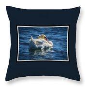 071118-50-c Throw Pillow