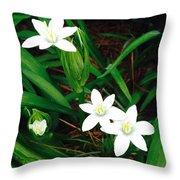 09032015045 Throw Pillow