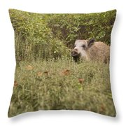 Wild Boar Sus Scrofa Throw Pillow