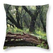 1b6338 Oak Forest On Sonoma Mountain Ca Throw Pillow