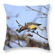 4427 - Cedar Waxwing Throw Pillow