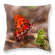 4534 - Butterfly Throw Pillow