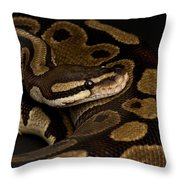 A Ball Python Python Regius Throw Pillow