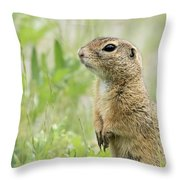 A European Ground Squirrel Standing In A Meadow In Spring Throw Pillow
