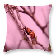 A Ladybug   Throw Pillow