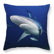 A Large Silvertip Shark, Fiji Throw Pillow by Terry Moore