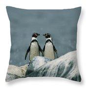 A Pair Of Humboldt, Or Peruvian Throw Pillow