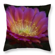 A Passion For Pink  Throw Pillow