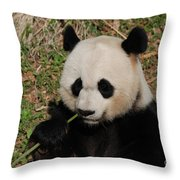 Adorable Giant Panda Eating A Green Shoot Of Bamboo Throw Pillow