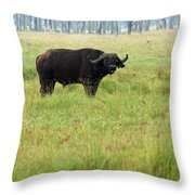 African Buffalo Throw Pillow