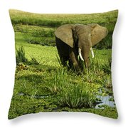 African Elephant In Swamp Throw Pillow