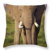 African Elephant Loxodonta Africana Throw Pillow by Gerry Ellis