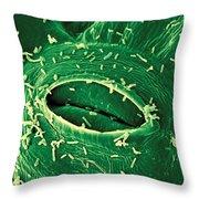 Agrobacterium Tumefaciens Throw Pillow